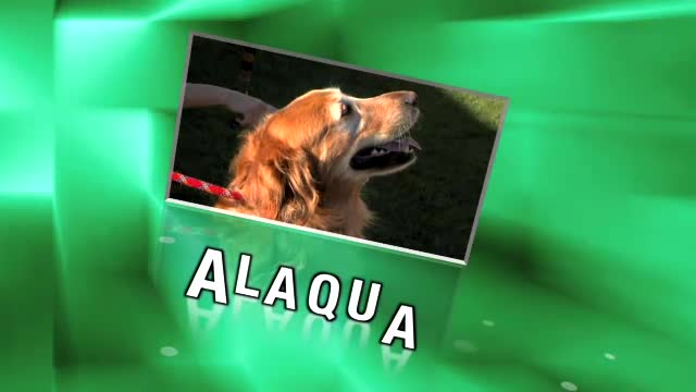 Alaqua Dining For Dogs