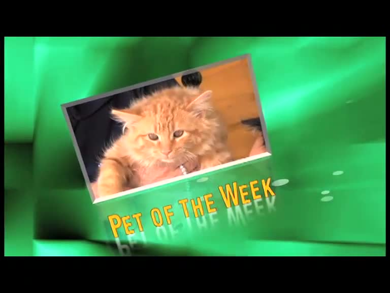 Alaqua Pet of the Week Anita