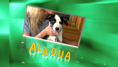 ALAQUA Pet of The Week – Bug