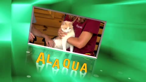 Alaqua TV  Pet Of  The Week – Dina