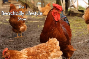 The Beachbilly Lifestyle Show  Episode 3