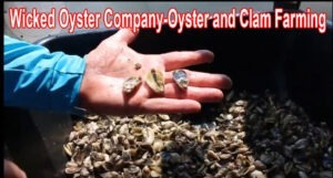 Wicked Oyster Company-Oyster and Clam Farming on Florida's Forgotten Coast