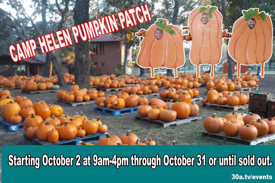 Camp Helen State Park Pumpkin Patch