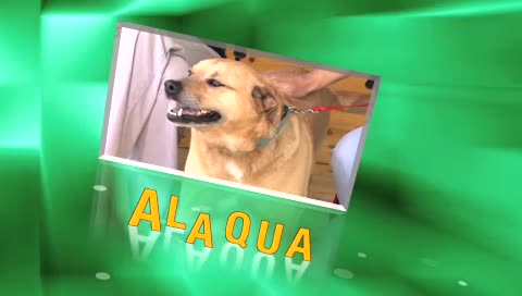 Alaqua Pet of the Week – Biscuit