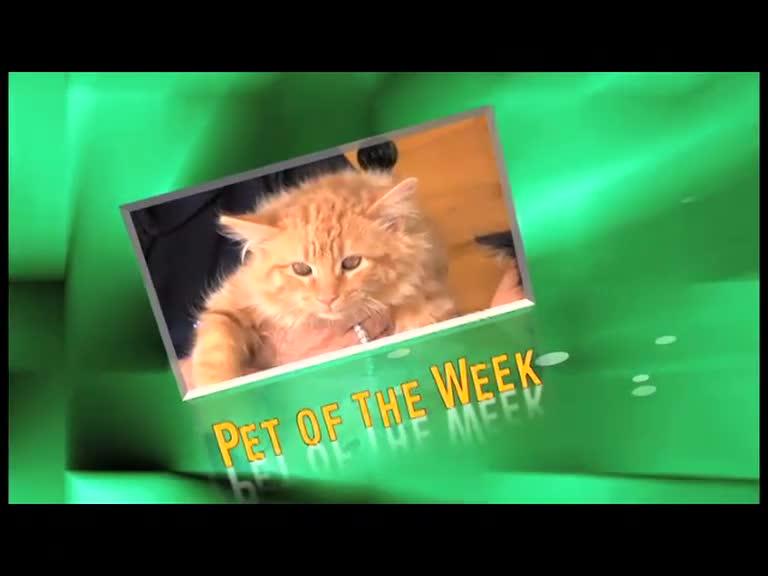 Alaqua Pet of the Week Anita