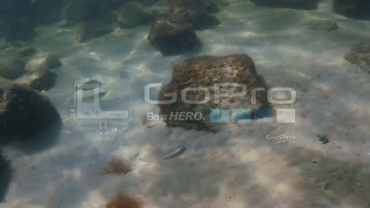 Panama City Beach Snorkel – The Jetties Teeming With Life!