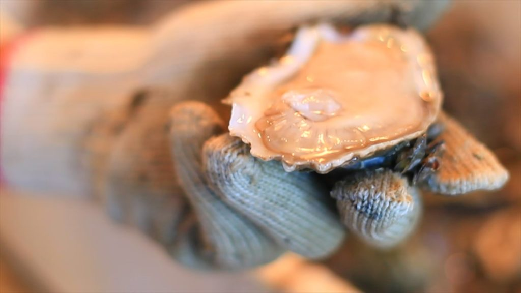 Apalachicola Oyster Fishery A Climate of Change