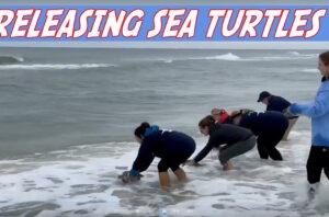Gulf World Marine Institute releases sea turtles