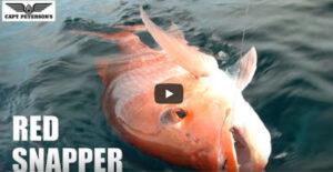 Red Snapper Fishing St George Island Port St Joe  Apalachicola Cape San Blas FL #30atv
