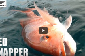 Red Snapper Fishing St George Island Port St Joe  Apalachicola Cape San Blas FL #30atv