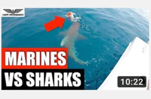 US Marines vs Bull Sharks Attacking and Eating Snapper