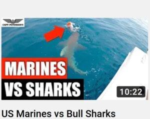 US Marines vs Bull Sharks Attacking and Eating Snapper