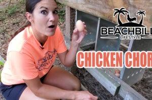 BeachBilly  Lifestyle Chicken Chores