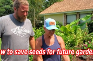 BeachBilly Lifestyle How to Save Your Seeds for Your Vegetable Garden