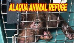 Countdown for Alaqua Animal Refuge